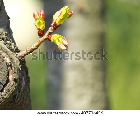 sprout growing from tree, new or start or beginning concept. copy space - stock photo
