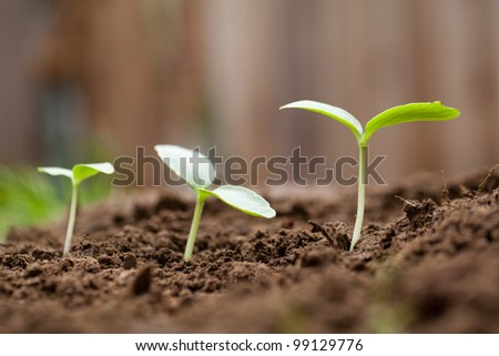 Sprout Growing out of dirt in a garden - stock photo