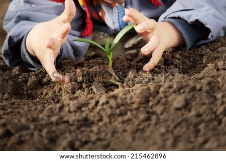 sprout in children hand - stock photo