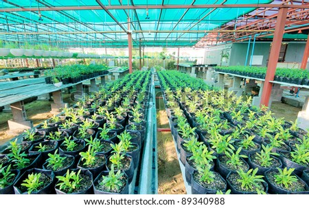 sprout in green house - stock photo