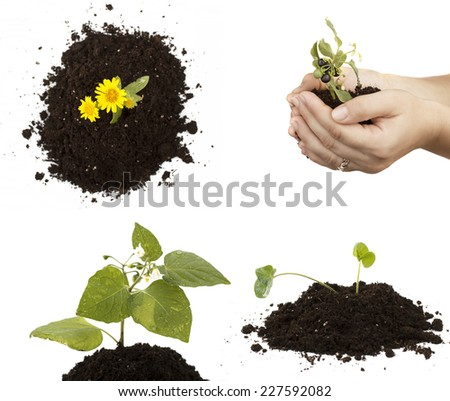 sprout in hands - stock photo