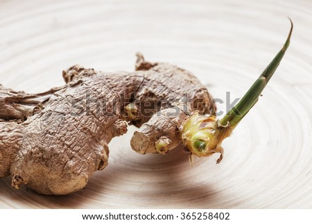 Sprout of ginger: useful spice for a healthy diet - stock photo