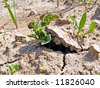 sprout of the potatoes breaks dry land - stock photo