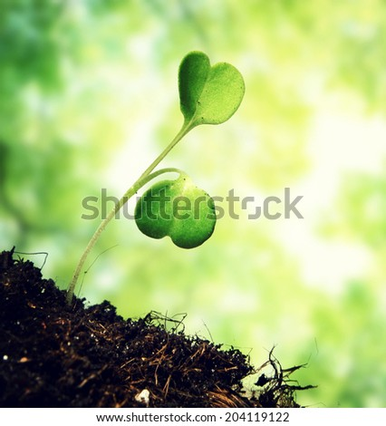 sprout on green bokeh background - stock photo