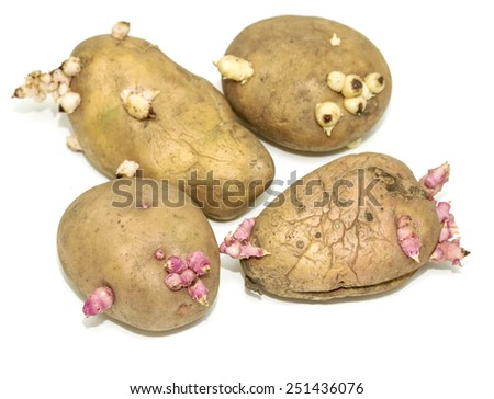 sprouted potatoes on a white background