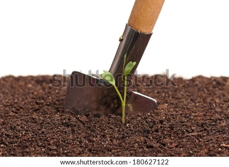 Sprouted young plant in organic soil over white background - stock photo