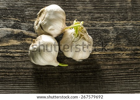 sprouting garlic on the table - stock photo