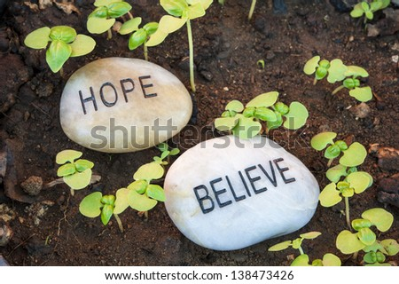 Sprouting plants surround hope and believe message rocks - stock photo