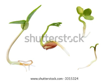 Sprouts collection - stock photo