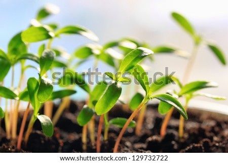 Sprouts group in sunny soil - stock photo