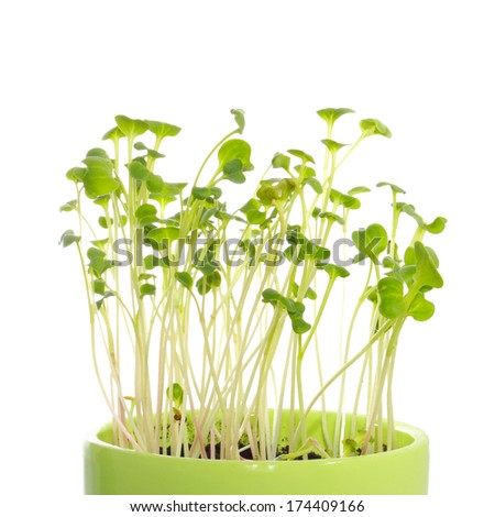 Sprouts in pot on white background - stock photo