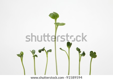 Sprouts on white background - stock photo