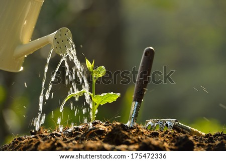Sprouts watered from a watering can - stock photo