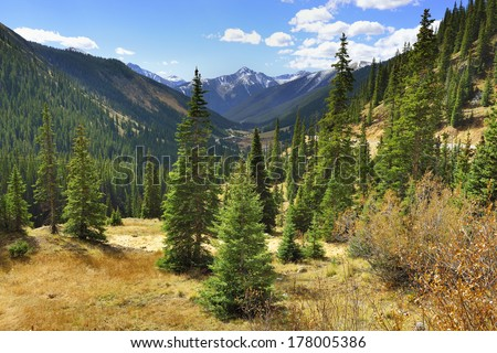 spruce and pine trees and mountains of Colorado - stock photo