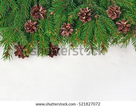 Spruce branch and cones on a white background