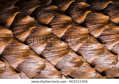 Spruce cone high close up texture