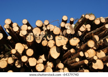 Spruce Logs Stacked with Blue Sky Background - stock photo