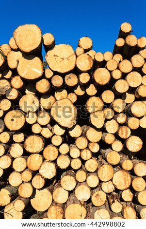 Spruce stack heap in the forest - stock photo