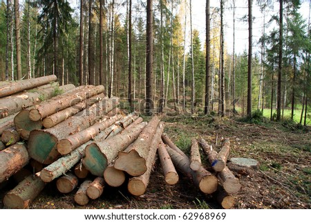Spruce Timber Logging in Forest - stock photo