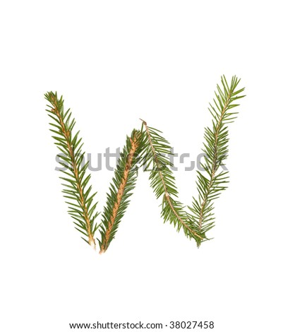 Spruce twigs forming the letter 'W' isolated on white - stock photo