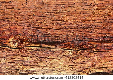 spruce wood in decay, showing biological insect attack ( Anobium pertinax ) - stock photo