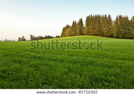 Spruces on the hill in sunset light - stock photo