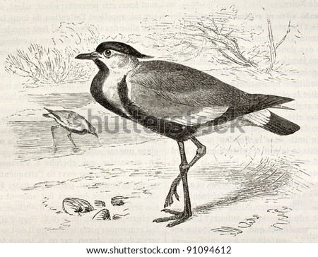 Spur-winged Lapwing old illustration (Hoplopterus spinosus). Created by Kretschmer and Wendt, published on Merveilles de la Nature, Bailliere et fils, Paris, ca. 1878 - stock photo