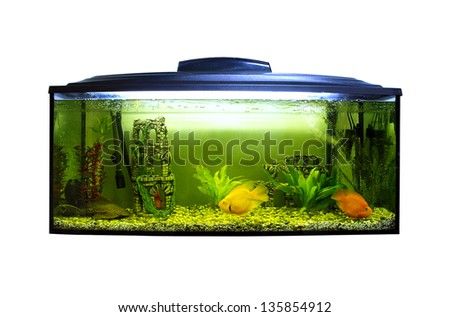 Square aquarium - stock photo