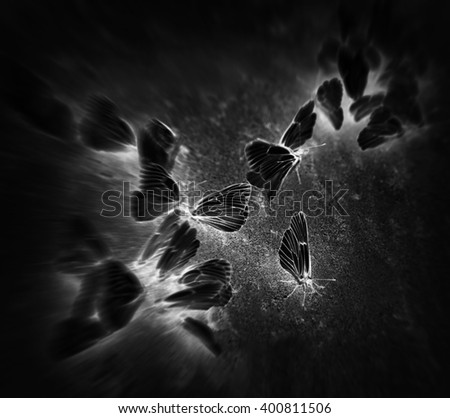 Square black butterflies vignette motion abstraction background backdrop - stock photo