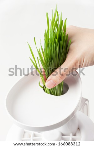 Squeezing wheat grass. - stock photo