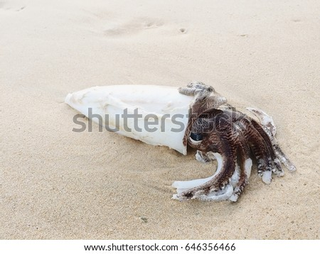 Squid die on the beach