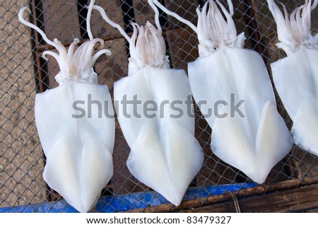 Squid drying in the sun . Thailand . - stock photo