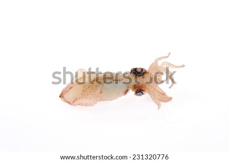 Squid isolated on a white background
