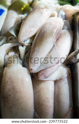 Squid, Teuthida, Decapodiformes,  - stock photo