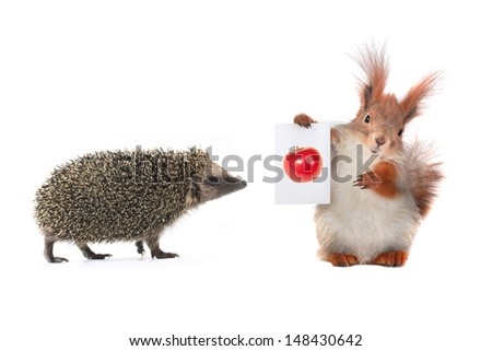 squirrel and hedgehog with sheet for a text writing - stock photo