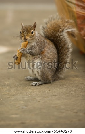 Squirrel at the side of the road by bin bag eating toast toast could be replaced with musical instrument with copy space.