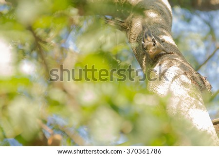 squirrel  climb on the tree - stock photo