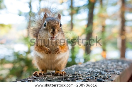 Squirrel comes by to chat. - stock photo
