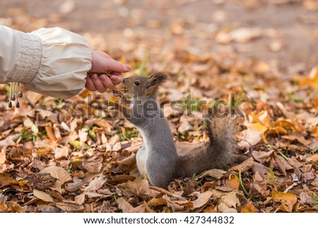 squirrel eating a nut on the palm - stock photo