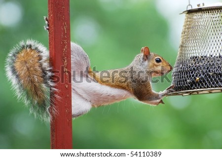 Squirrel Feeding - stock photo