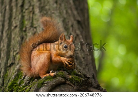 Squirrel in summer park  - stock photo
