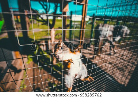 Squirrel in the cage of zoo