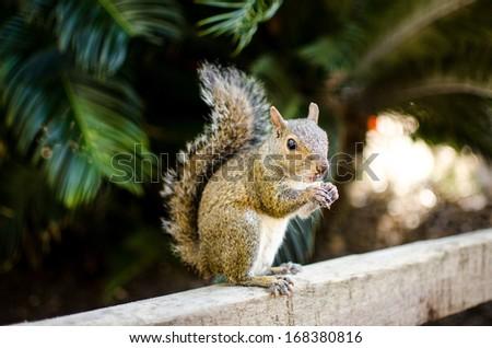 Squirrel Nature Wildlife - stock photo