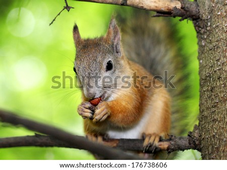 Squirrel on a tree - stock photo