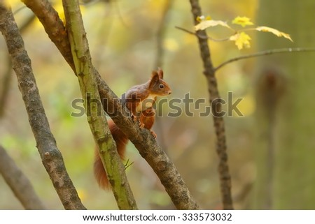 squirrel on branch bushes