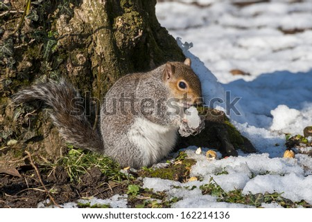 Squirrel refreshment - stock photo