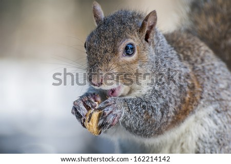 Squirrel's lunch - stock photo