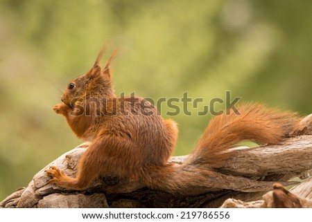 squirrel sitting on a tree stump