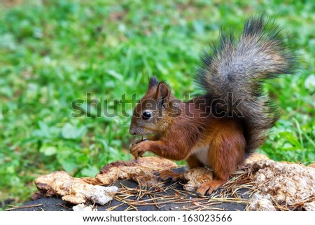 Squirrel sitting on a tree stump in the Catherine Park in Pushkin near St. Petersburg, Russia