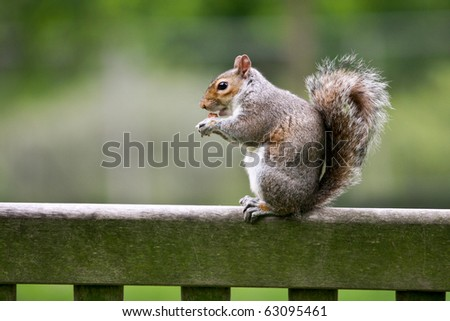 Squirrel standing and eating a nut - stock photo